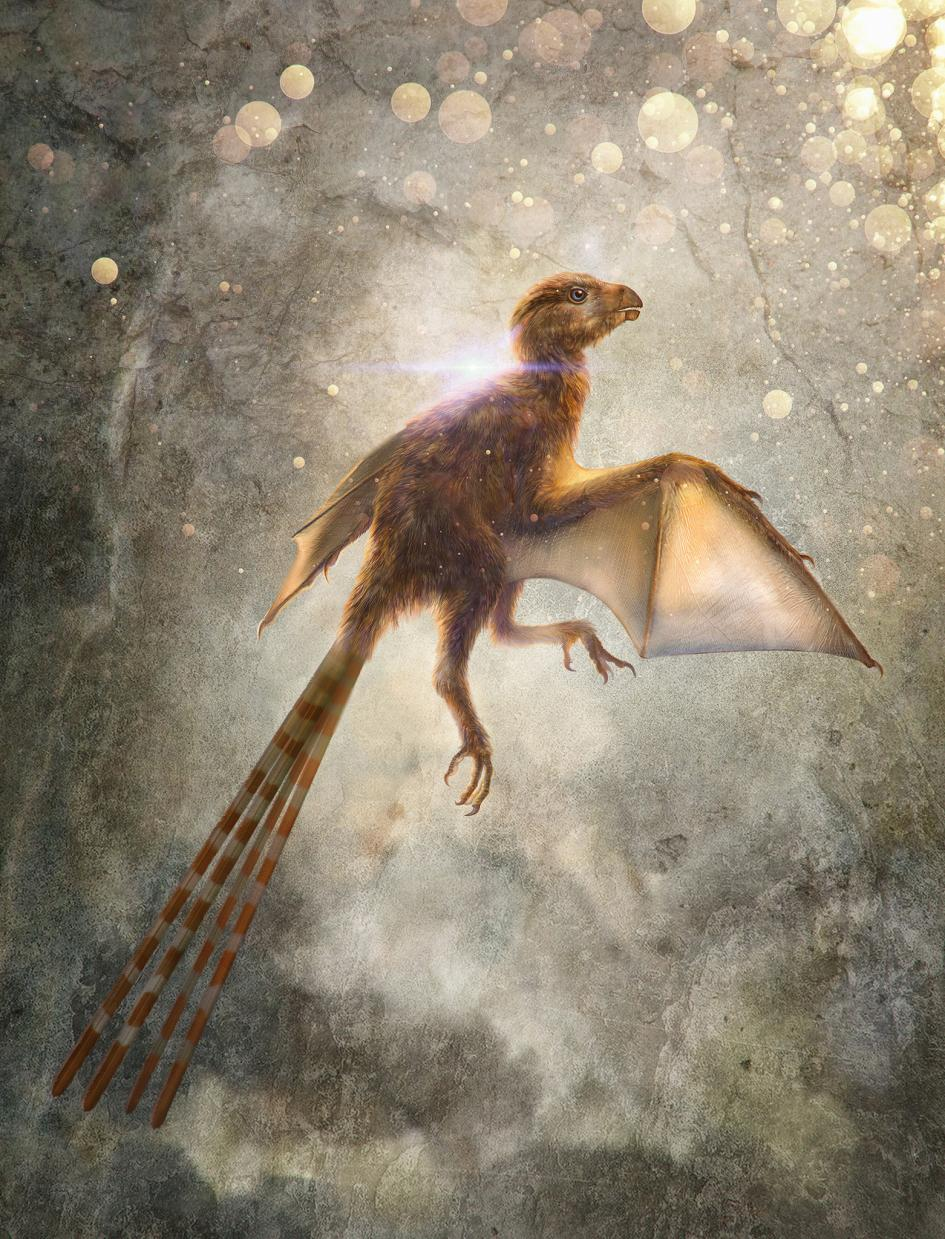 01-ambopteryx.adapt.945.1.jpg