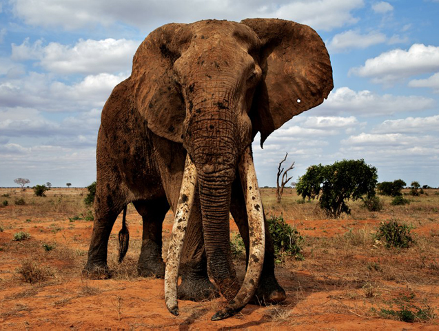 1-africans-for-elephants-murembo-save-the-elephants-photo-by-johan-marais-tsavo.jpg
