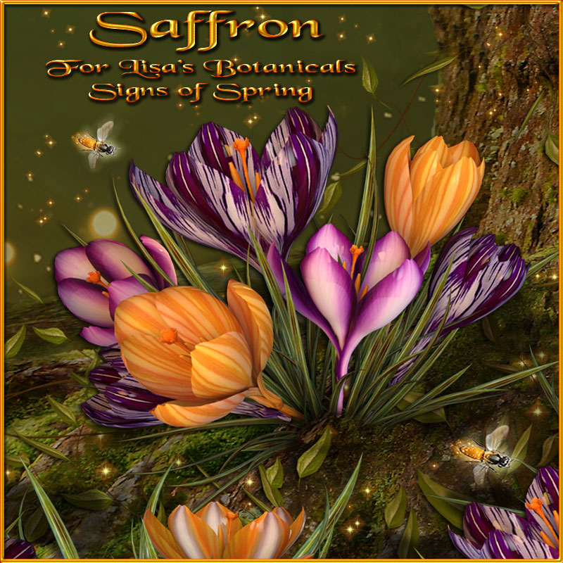 12012-saffron-for-lisa-s-botanicals-signs-of-spring-news-02.jpg