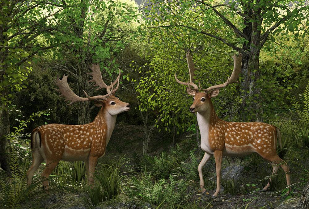 12021-cwrw-fallow-deer-ad-02.jpg