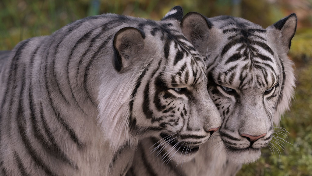 12103-cwrw-white-tigers-for-the-hivewire-tiger-news-02.jpg