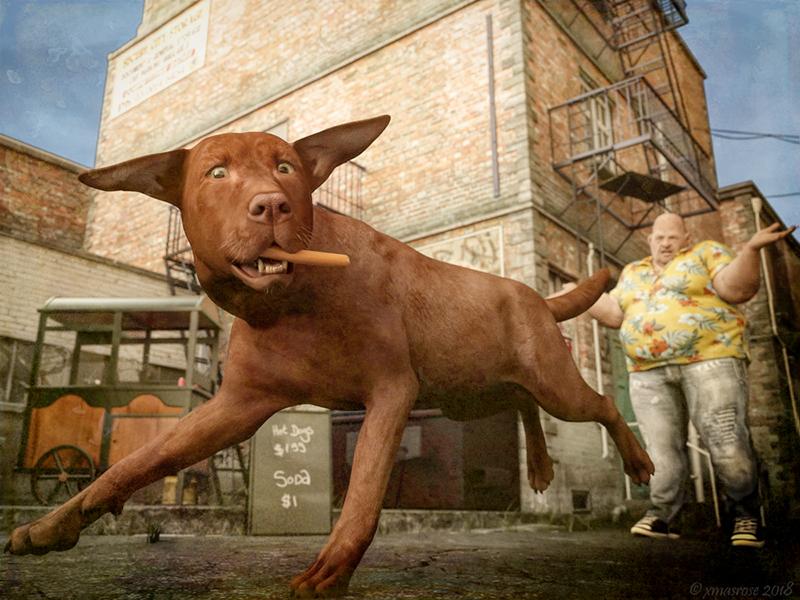 18_HW dog--800.jpg