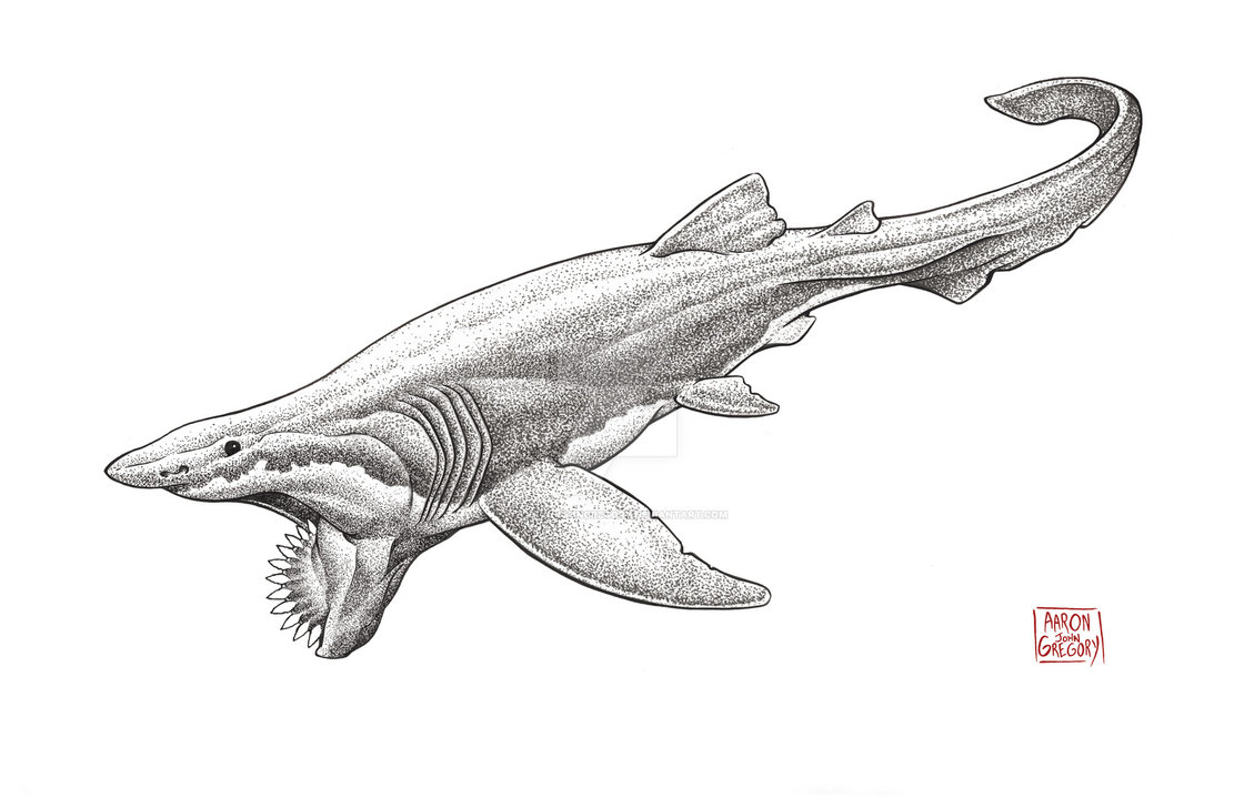 825_helicoprion_aaron_john_gregory.jpg