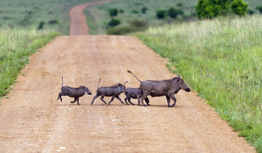 africa-animals8-53a7b8505756a6af5609cd267c51deb3-840x490-85-nocrop.jpg