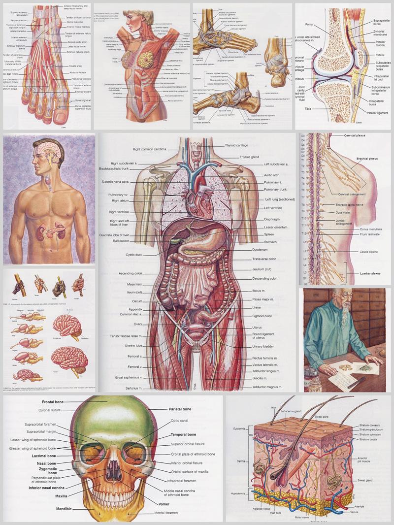 Anatomy01.jpg