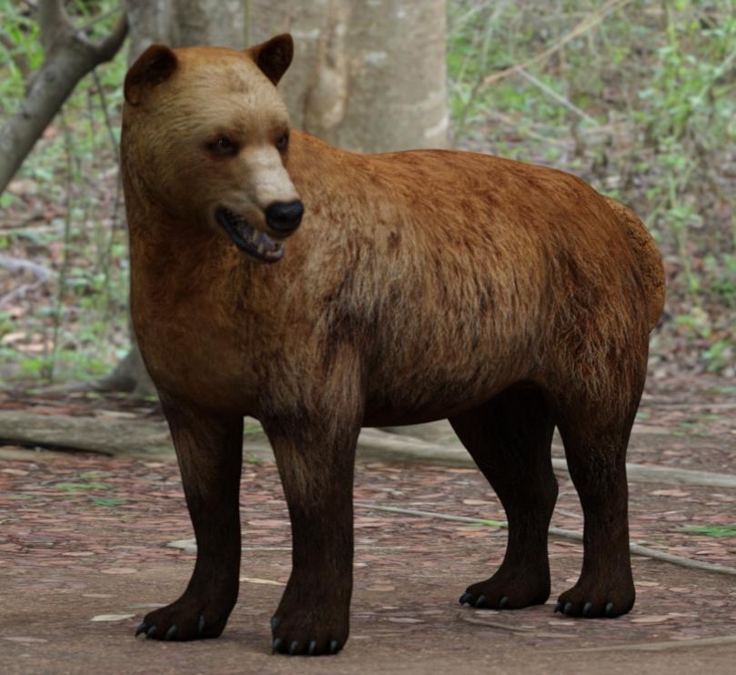 BearDog02.jpg