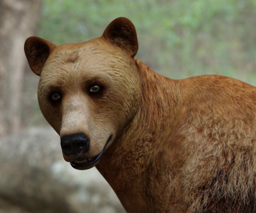 BearWIP02.jpg
