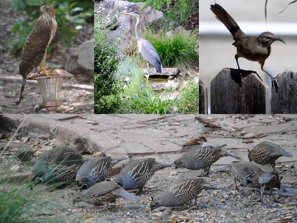 Birds in Ken's Back Yard.jpg