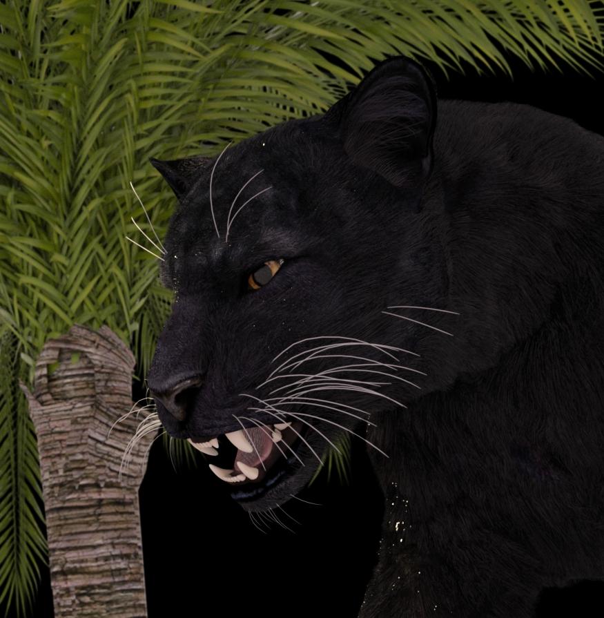 black panther 001.jpg