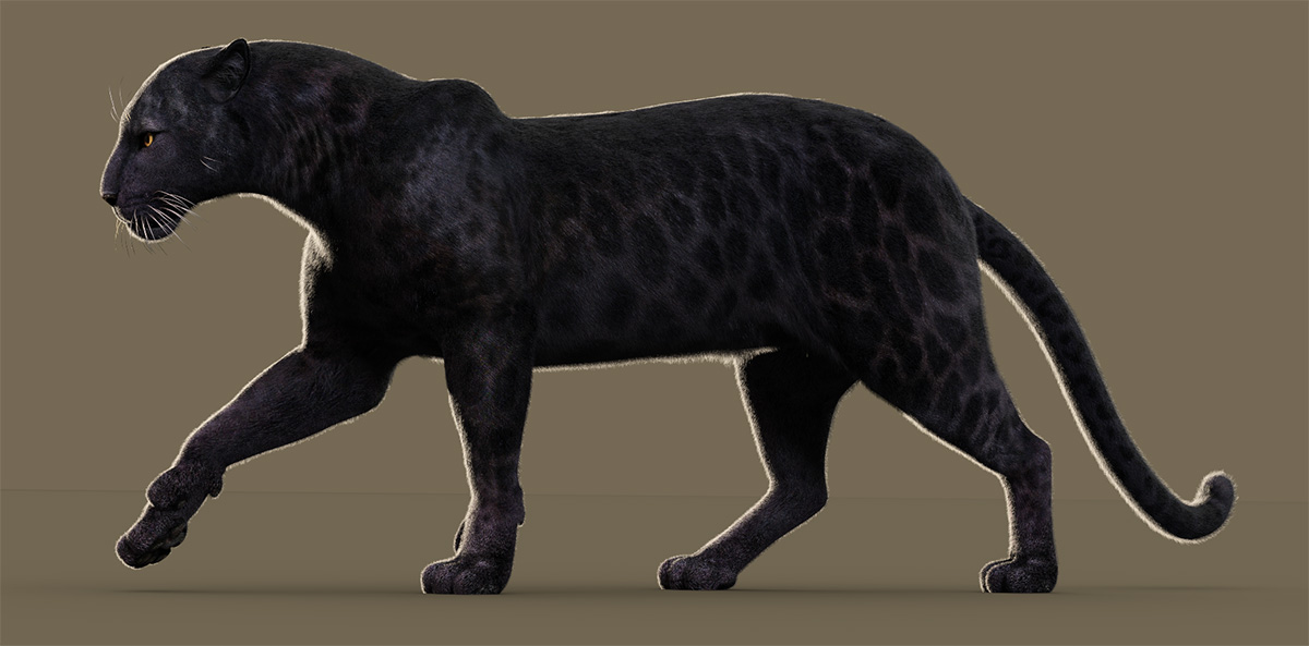 BlackPanther_LeopardAfricanAMH1.jpg