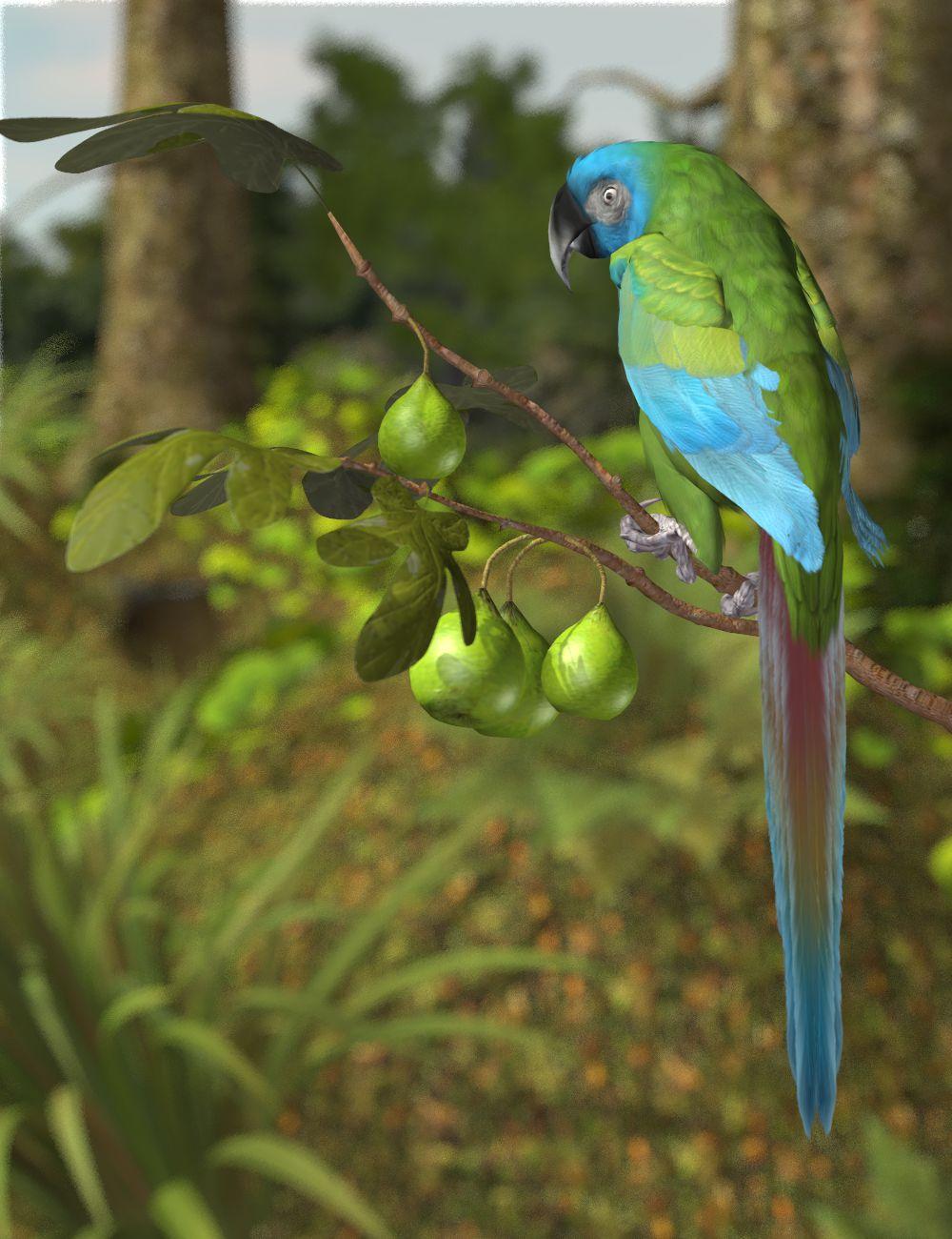 Blue-headed Macaw.jpg