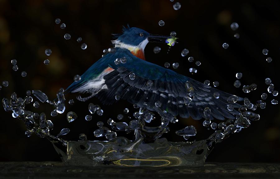 BonniesKingfisher2.jpg