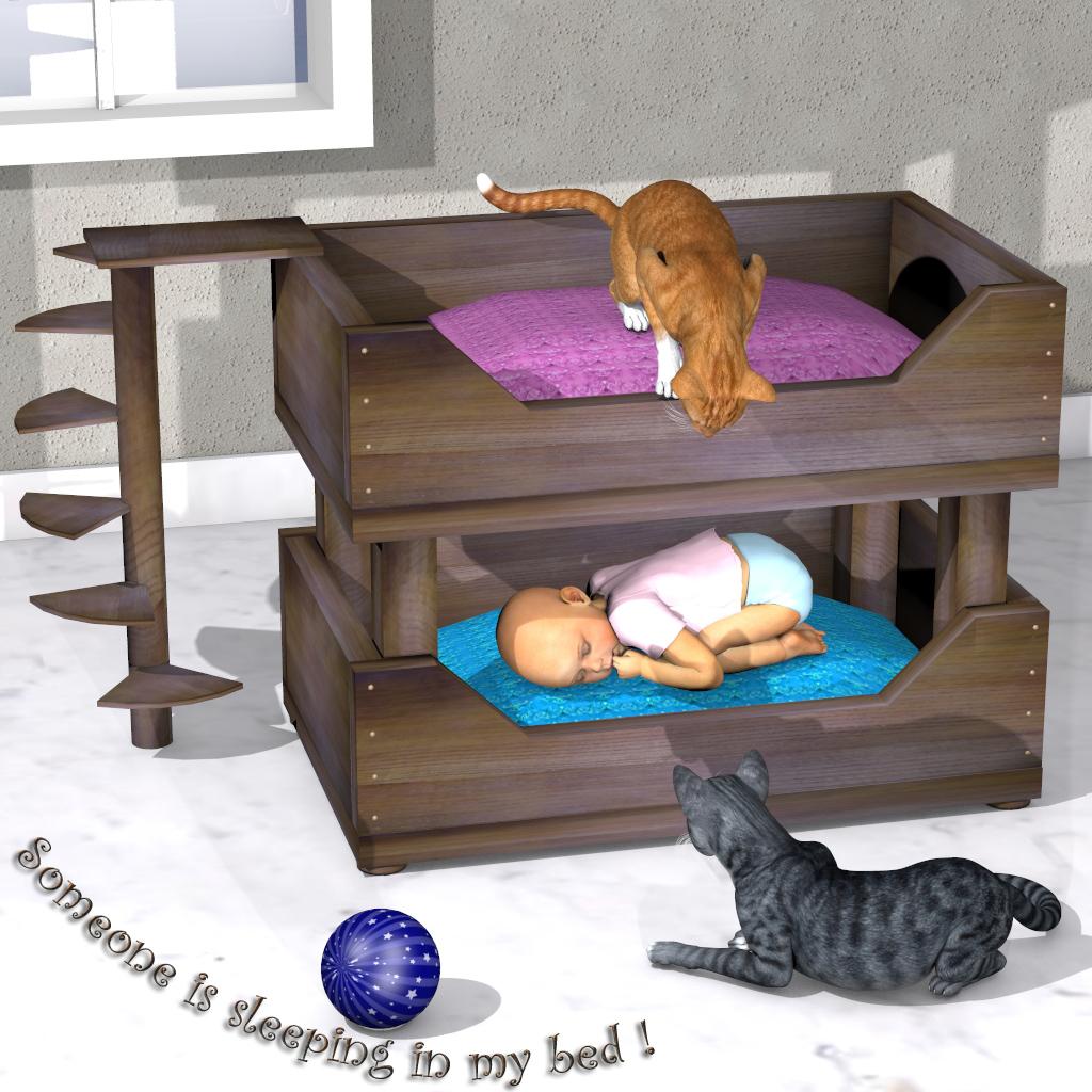Cat_Double_Bed_newsletter.jpg