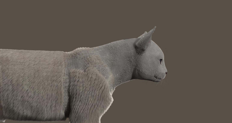 CatDyn10.jpg