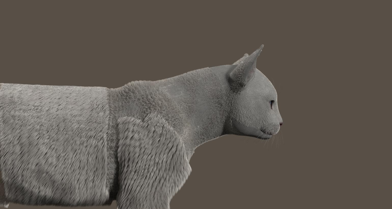 CatDyn11.jpg