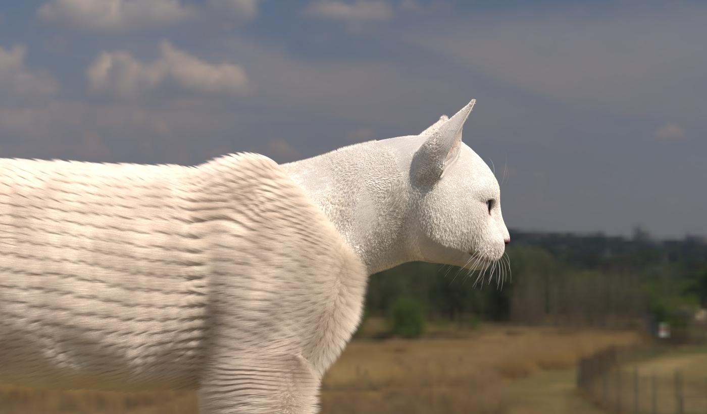 CatDyn15.jpg