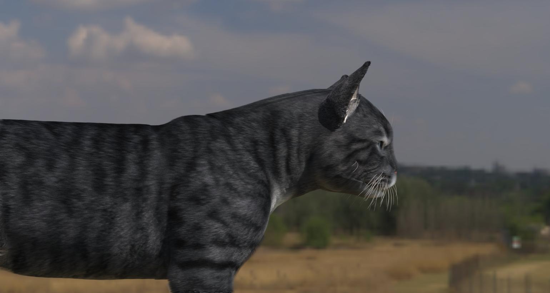CatDyn16.jpg