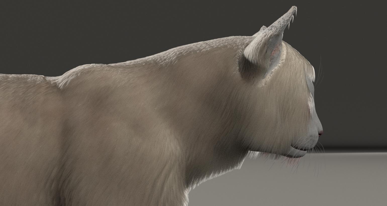 CatDyn4.jpg