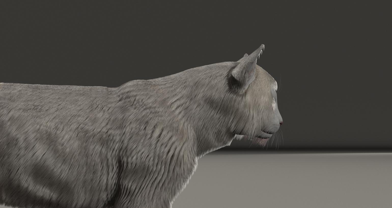 CatDyn5.jpg