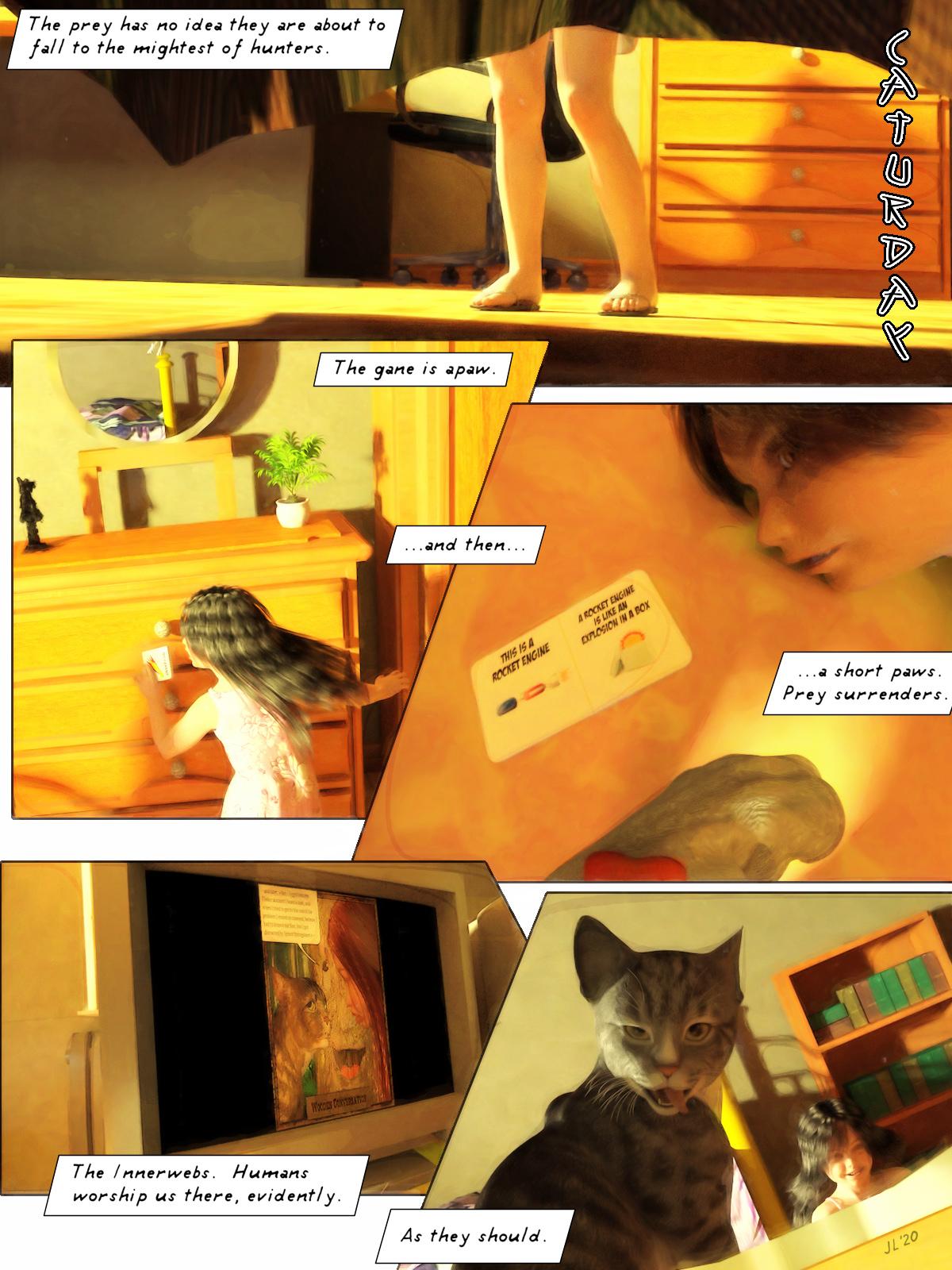 Caturday Adventures.jpg