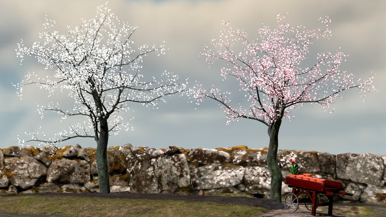 Cherry trees early spring.jpg