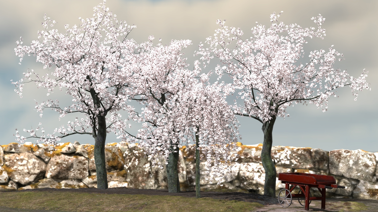 Cherry Trees   Spring Rain Is Coming White