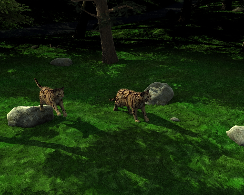 Clouded Leopards.jpg