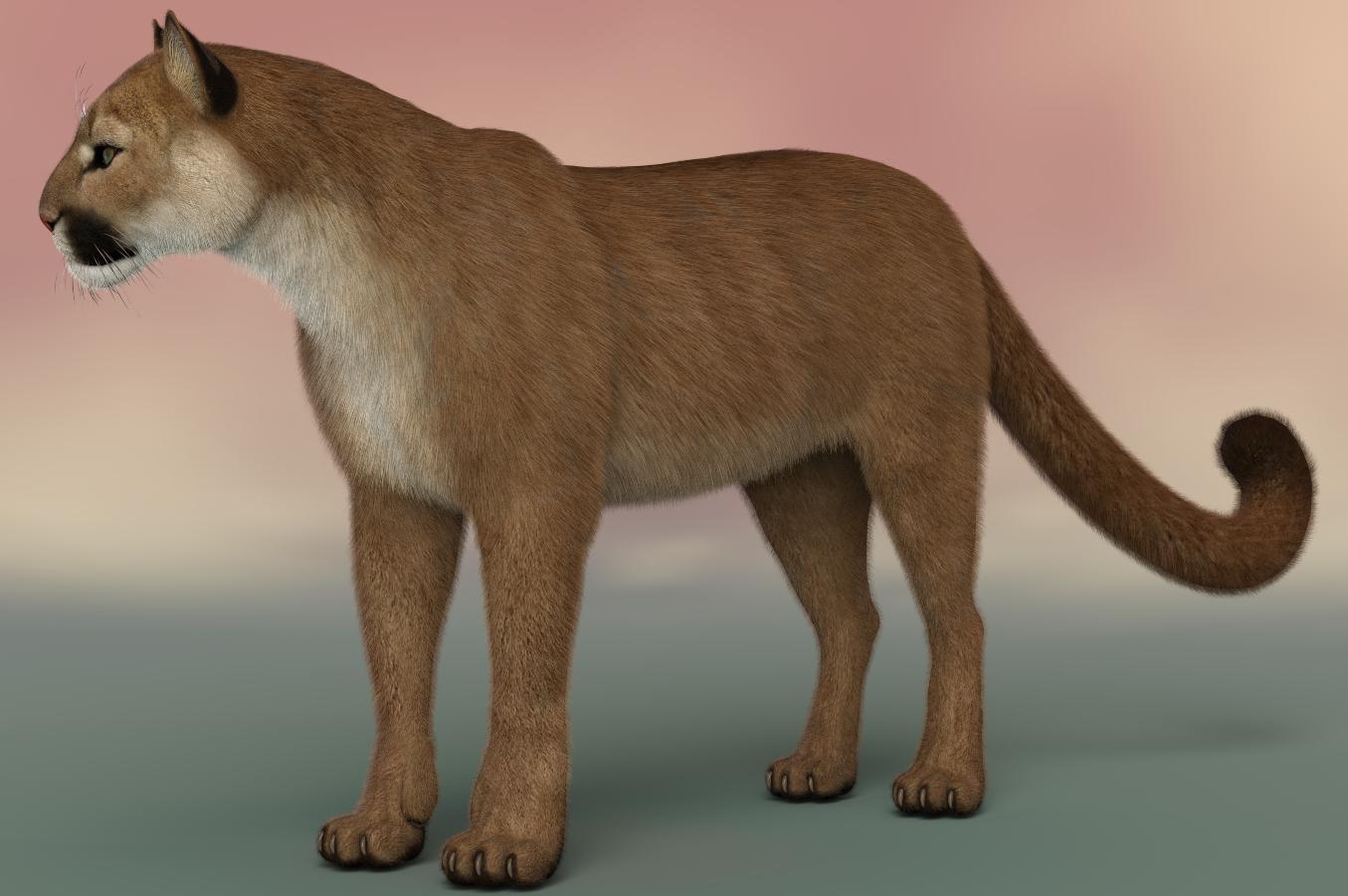 Cougar LMAH ZEN 2a.jpg