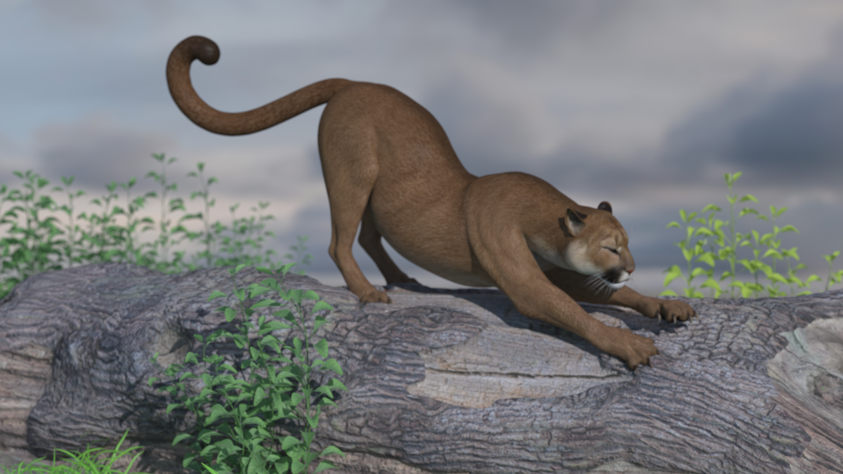 Cougar stretch 2.png