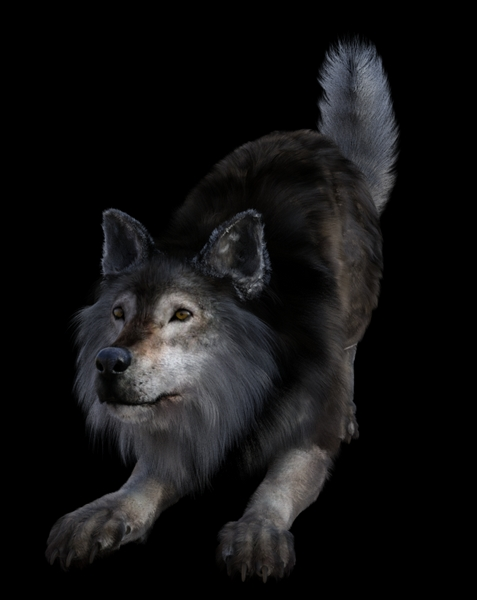 DIRE WOLF TIMBER.jpg