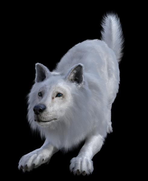 DIRE WOLF WHITE.jpg