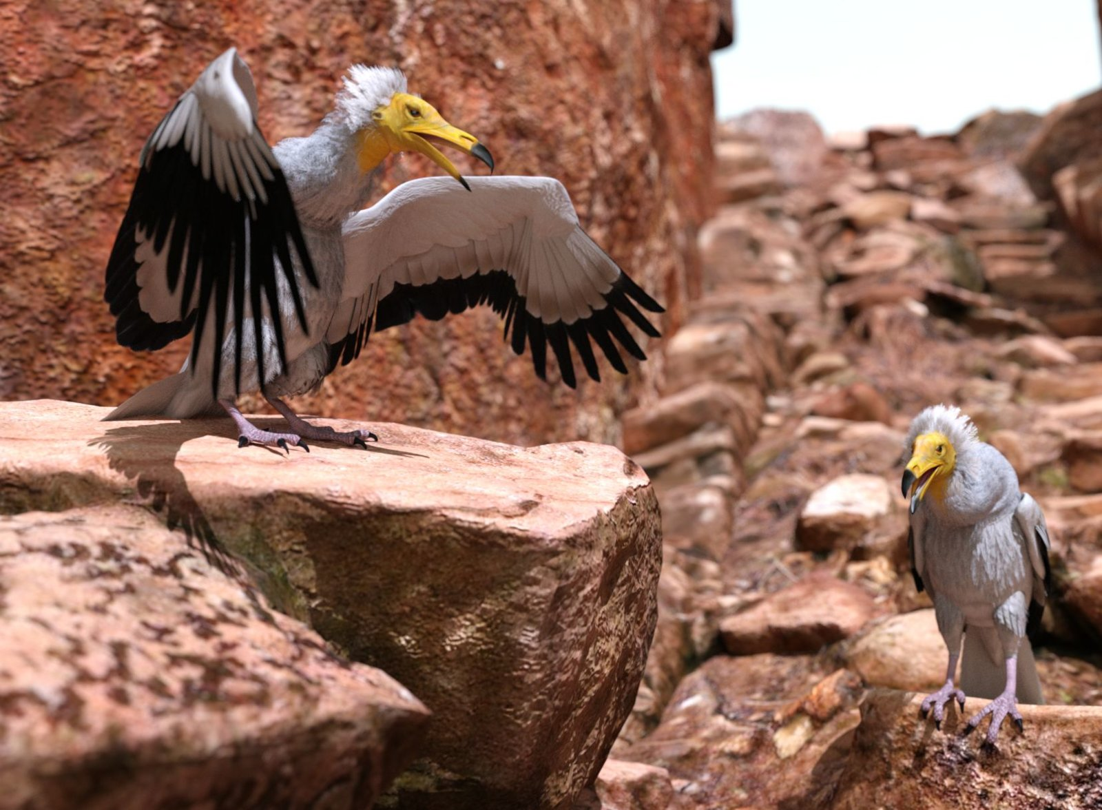 Egyptian Vultures.jpg