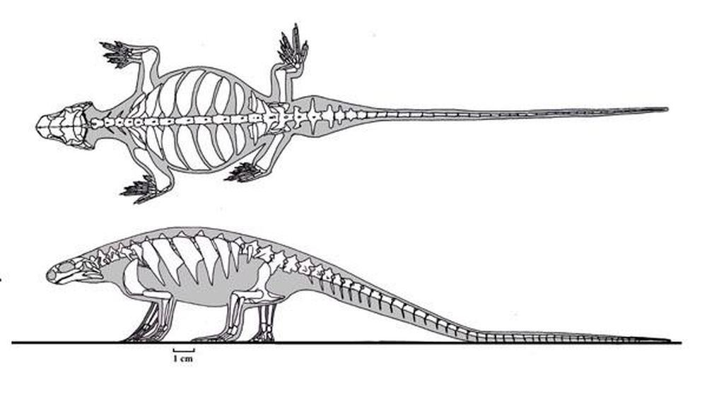 eunotosaurus-75a7e97e-5fec-4efd-ab3b-6fec5c8abbe-resize-750 - large.jpg