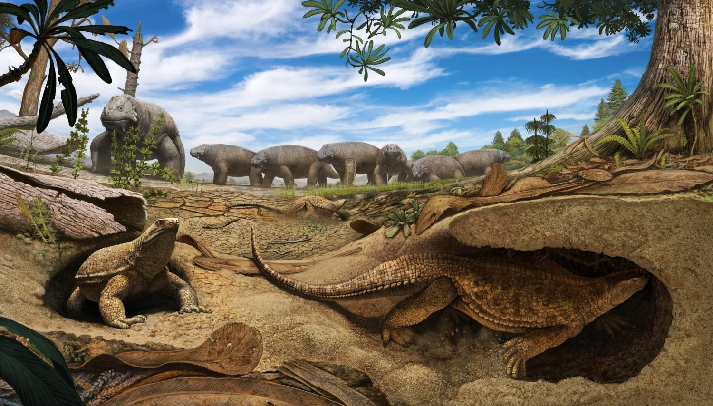 Eunotosaurus africanus.jpg