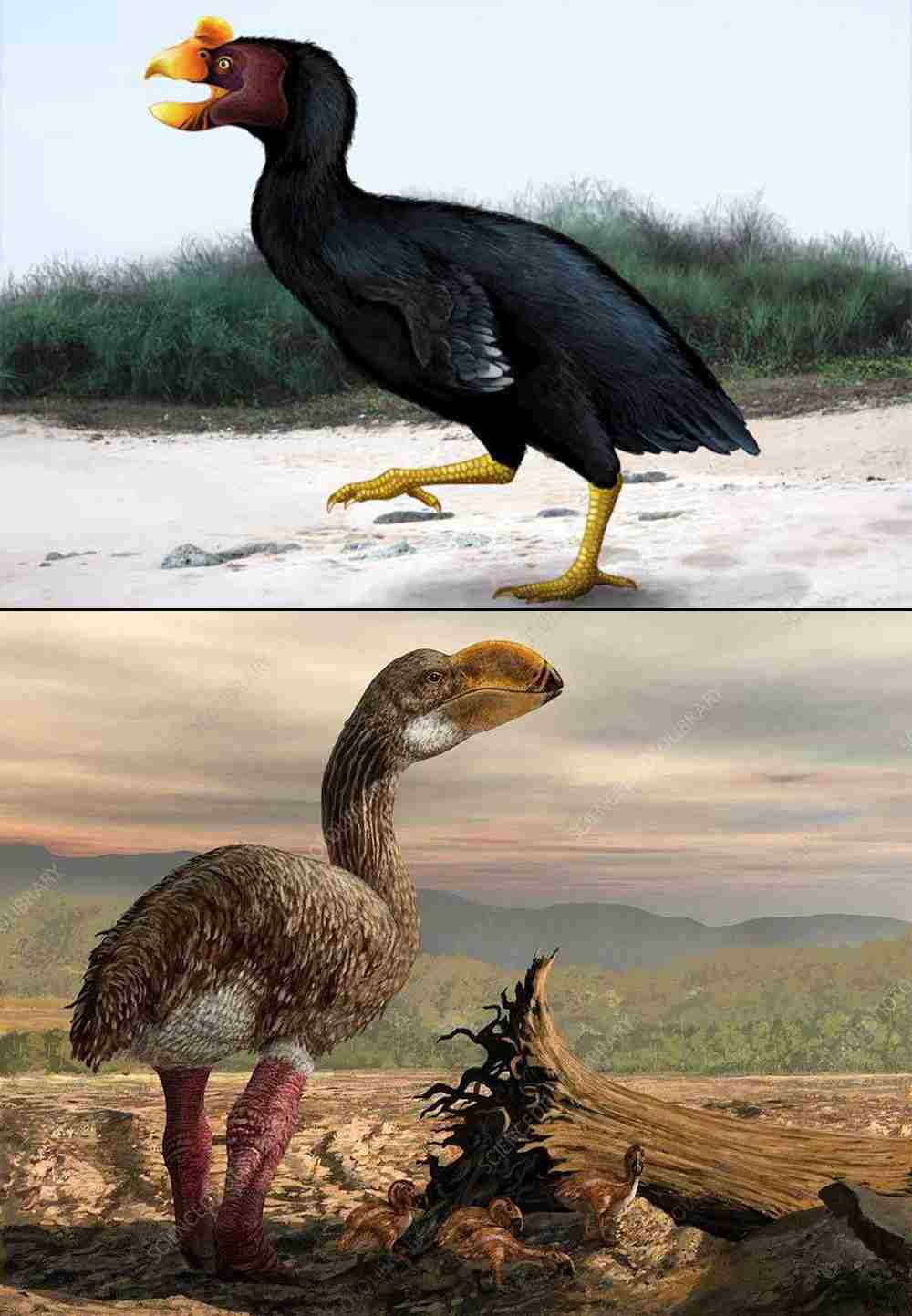 Extinct Flightless Birds.jpg