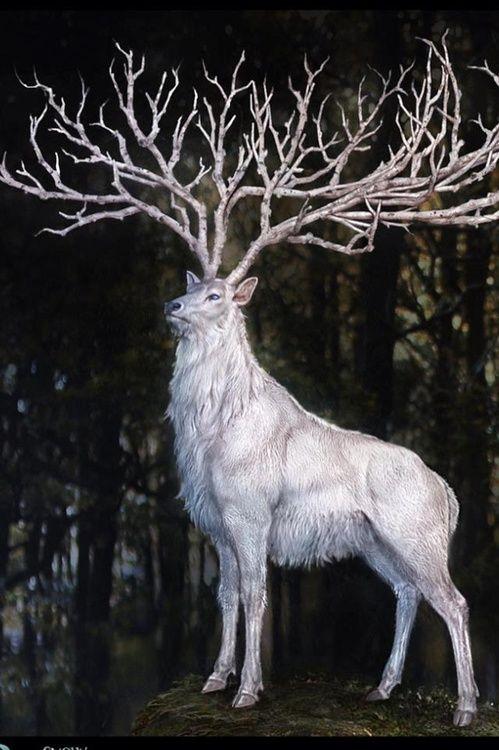 fantasy stag.jpg