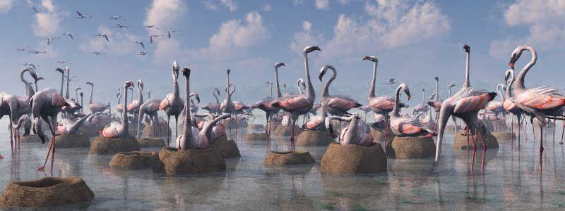 Flamingos of the Great Rift Valley lg.jpg