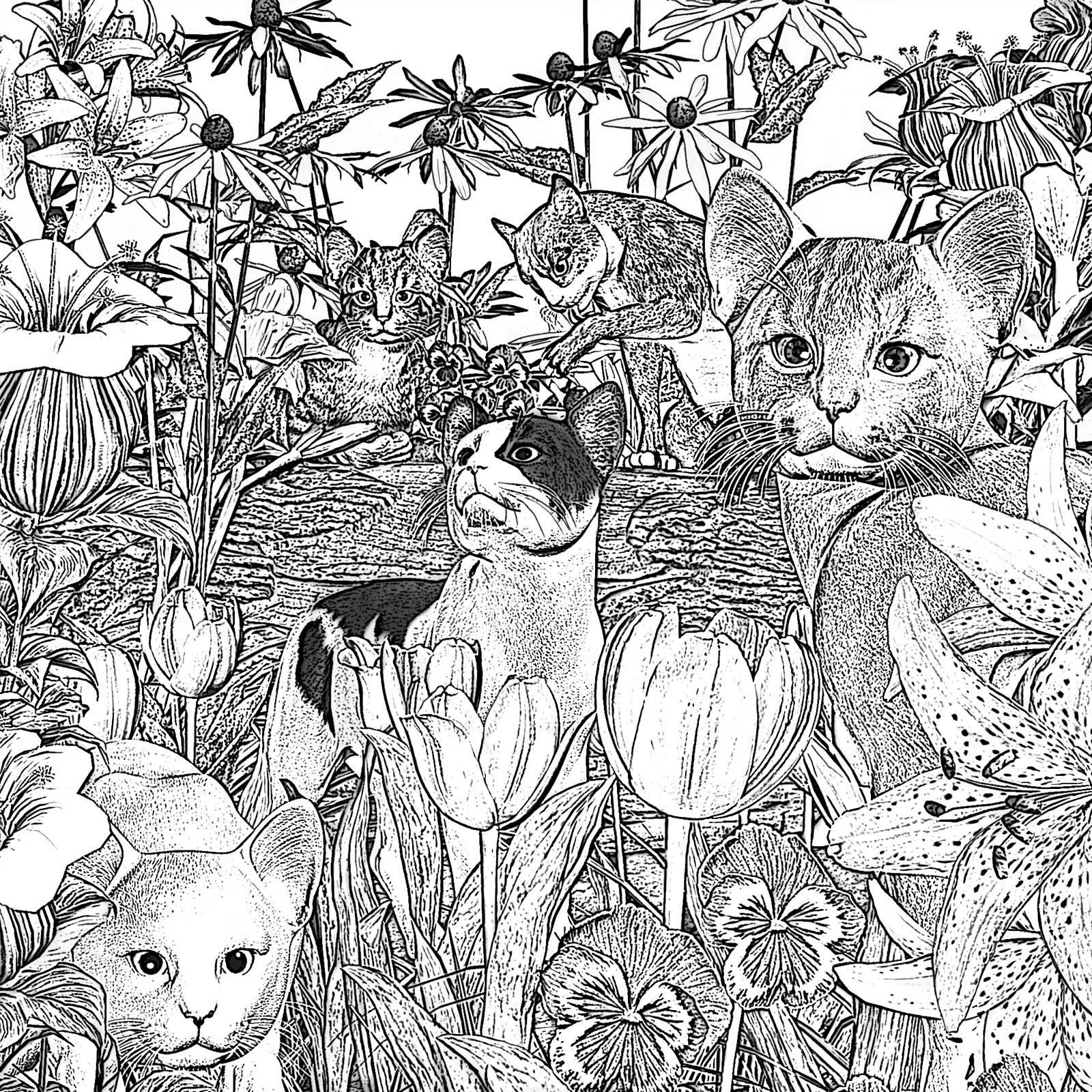 Flower-Cats.jpg