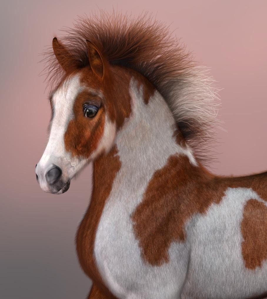 FoalSorrelPinto_SBHstyle3_a.jpg