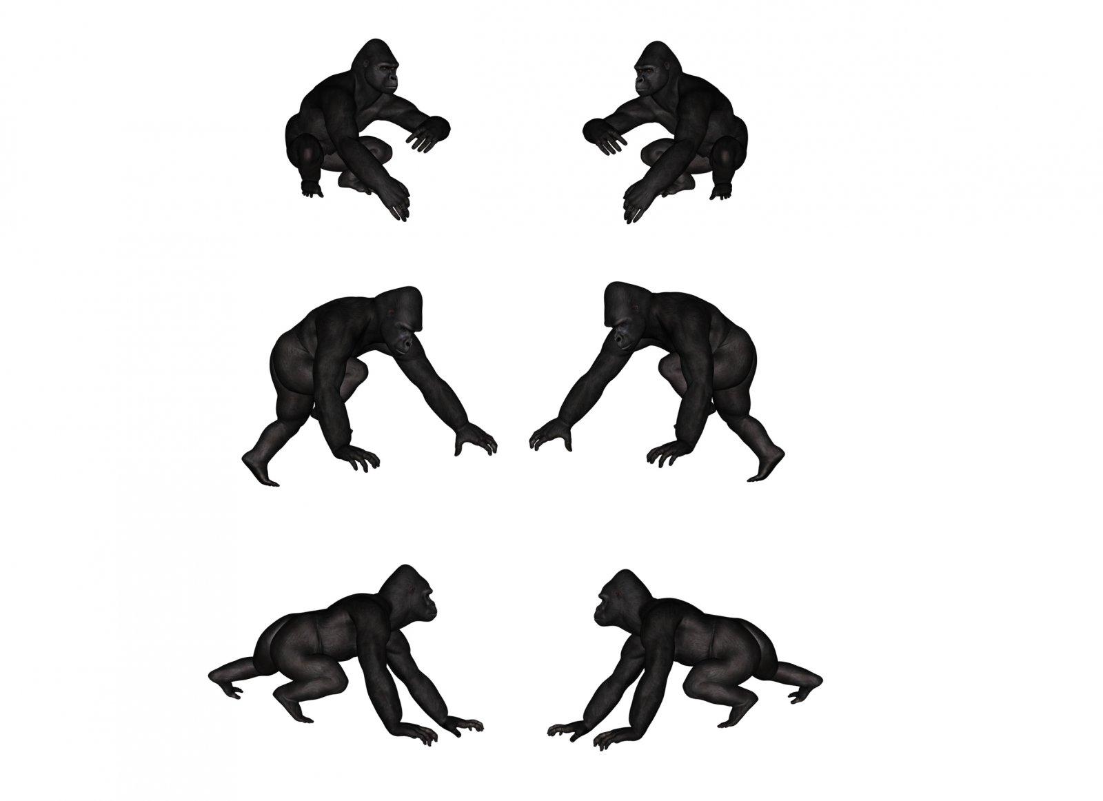 Full Poses 2.jpg