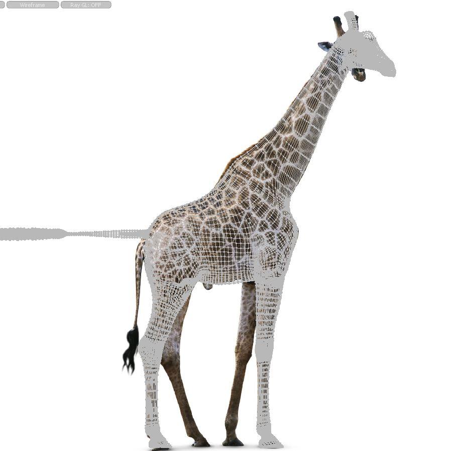 GiraffeWork20.JPG
