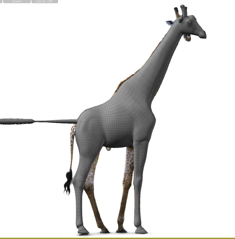 GiraffeWork21.JPG