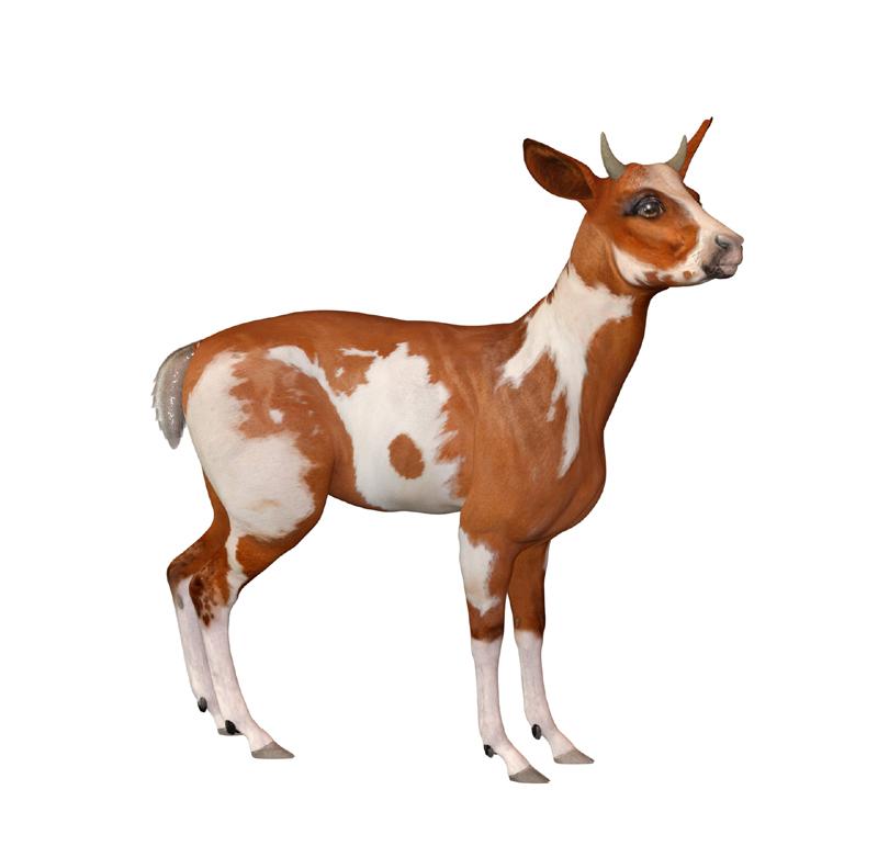 goat copy.jpg