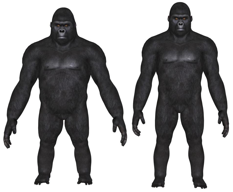 GorillaApe.jpg