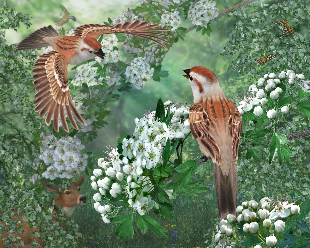 !Grand Prize Blossom's Delight by Flint_Hawk.jpg