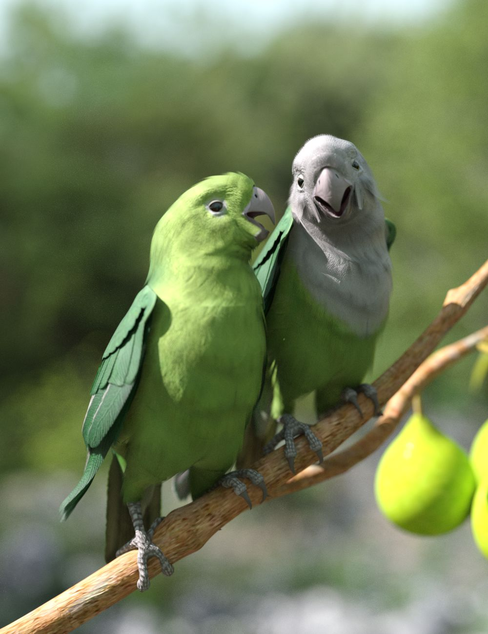 grey-headed lovebirds.jpg