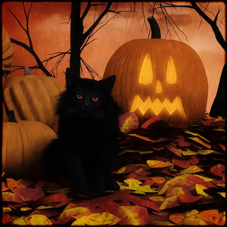 Halloween_Black_Cat_900x900.jpg