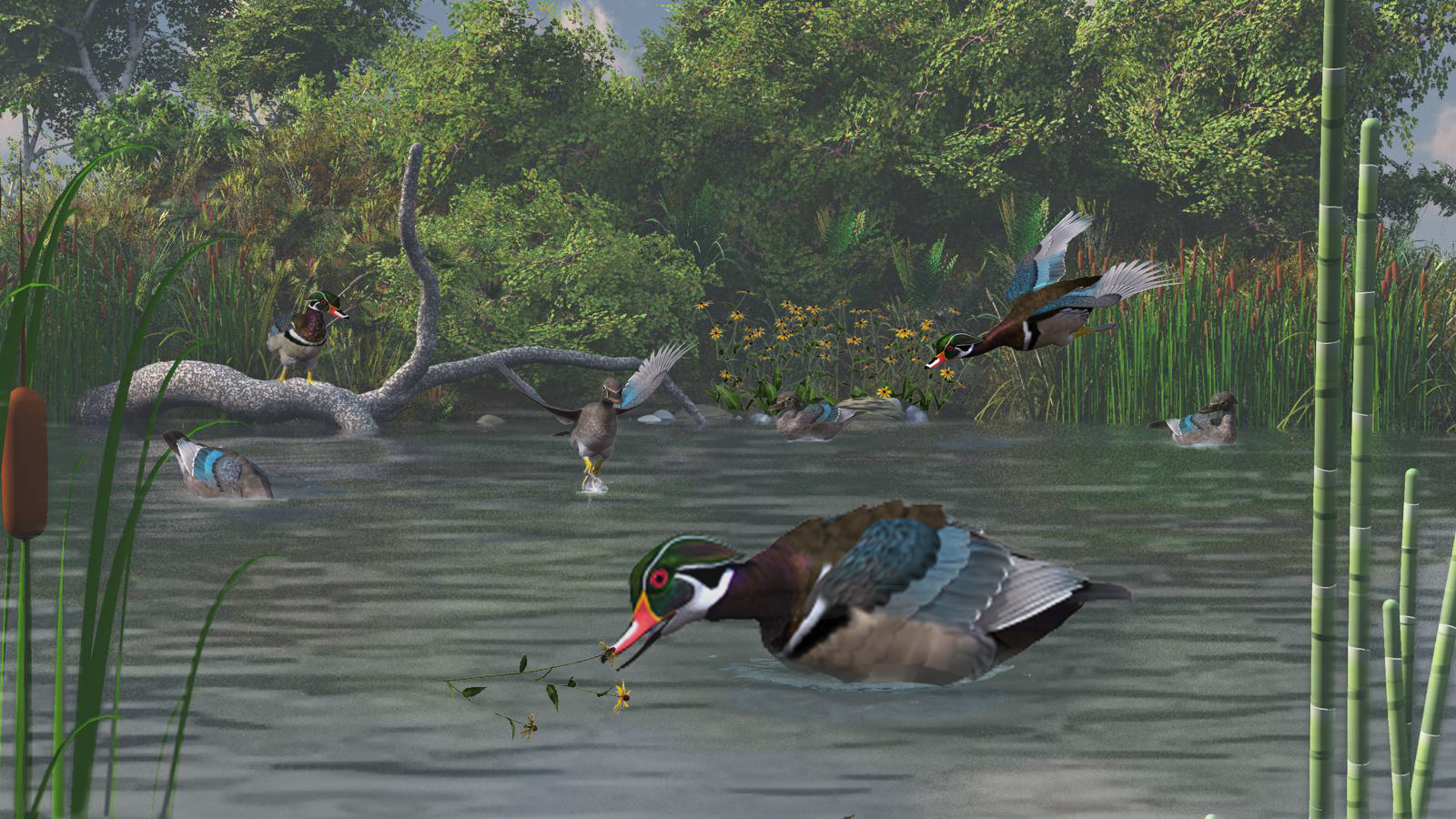 HM 3 Wood Duck Haven by Cinadisilver.jpg