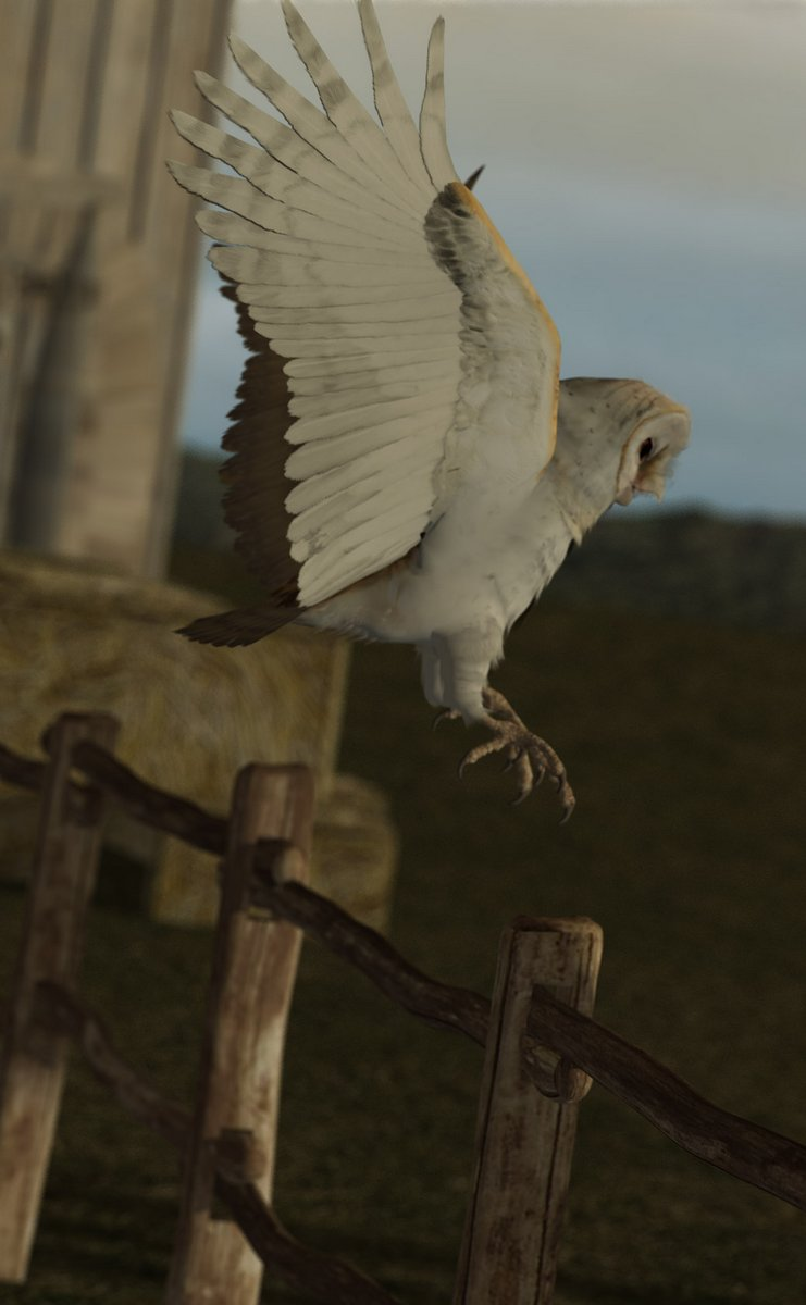 HM03_Barn Owl by sandman_max.jpg