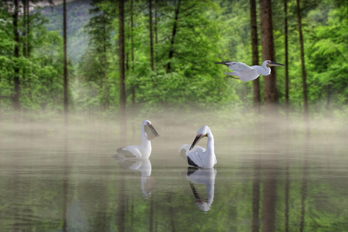 HM4 Misty Morning Lake by My 3D Spin.jpg